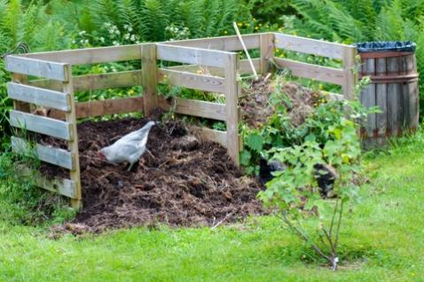 פינת קומפוסט בגינה