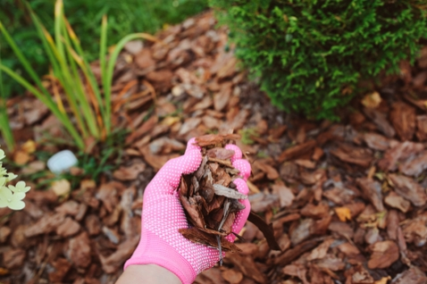 פיזור חיפוי של שבבי עץ
