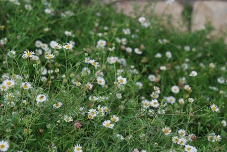 מרקם פרחים בלבן וצהוב
