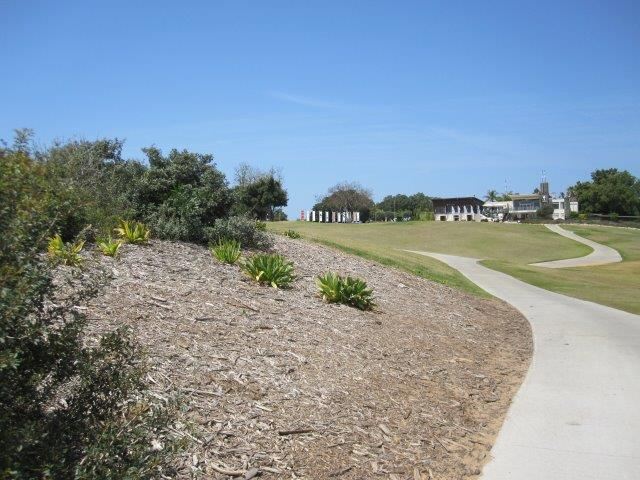 חיפוי קרקע בין צמחיית בר