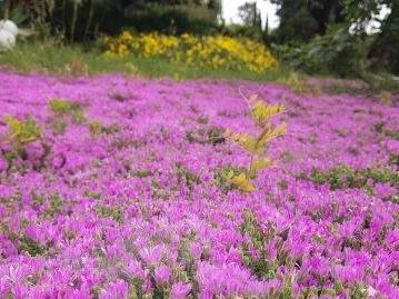טלמון רב פרחים