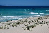 פריחה לצד החוף