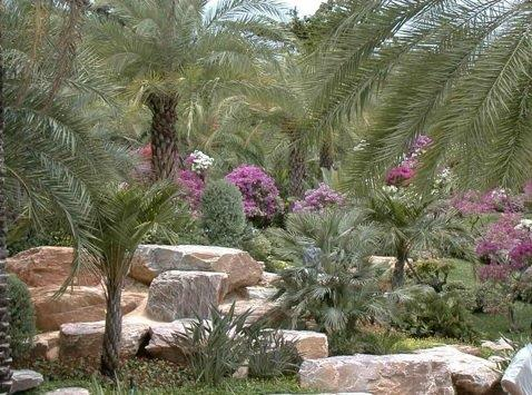 שילוב אבן וסלע בגן