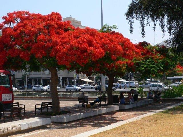 צאלון בכיכר רבין בתל אביב