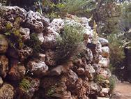 קיר עם צמח פורח