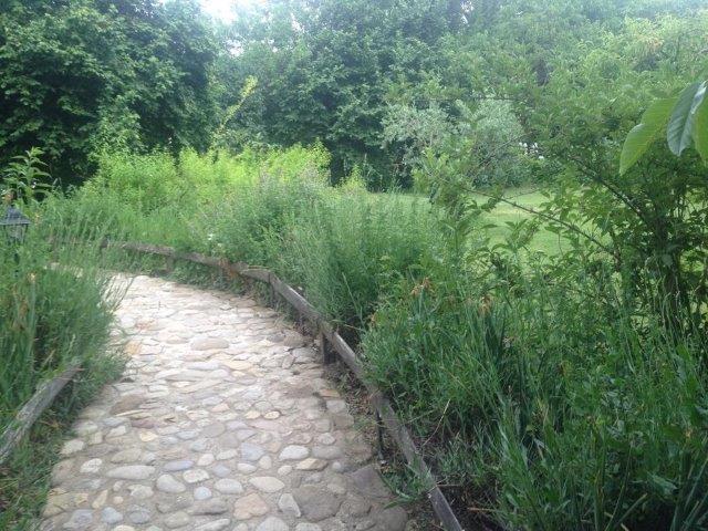 צמחי תבלין משני צידי השביל. עיצוב וביצוע: קרלה אפרתי