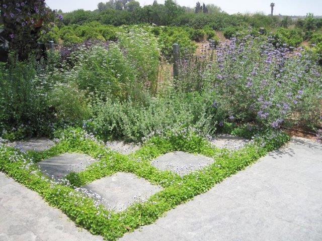 צמחי תבלין בגינה