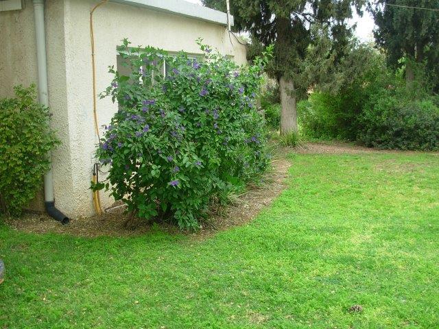 ריסוס שולי המדשאה