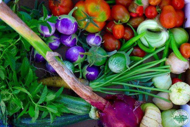 שפע קייצי - קטיף ירקות מזינים