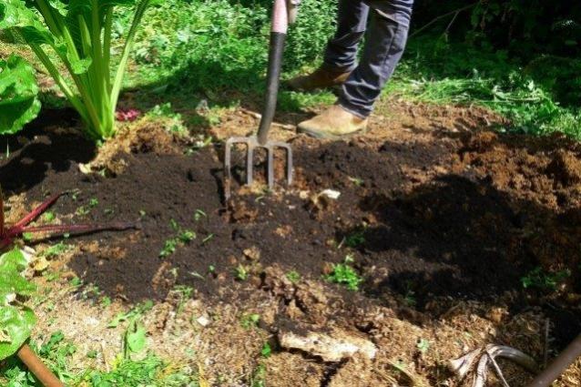 תיחוח הקרקע לעומק 30 סנטימטר והצנעת הקומפוסט