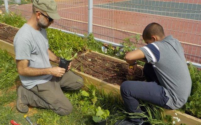 בשולי מגרש הספורט מוקמת ערוגת ירק. העשייה של הילדים, ההכוונה של הצוות.