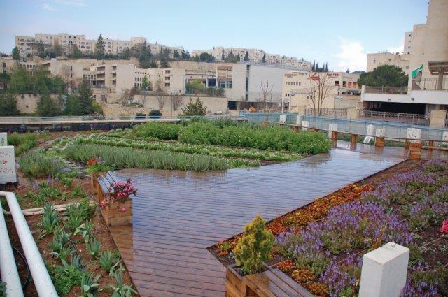 גג ירוק בבית ספר אור תורה בשכונת רמות בירושלים