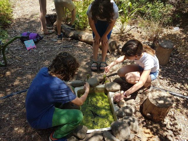 עולם ומלואו. אלמנט מים מכיור ישן מהווה חלקת מחקר קטנה לצמחים ובעלי חיים.