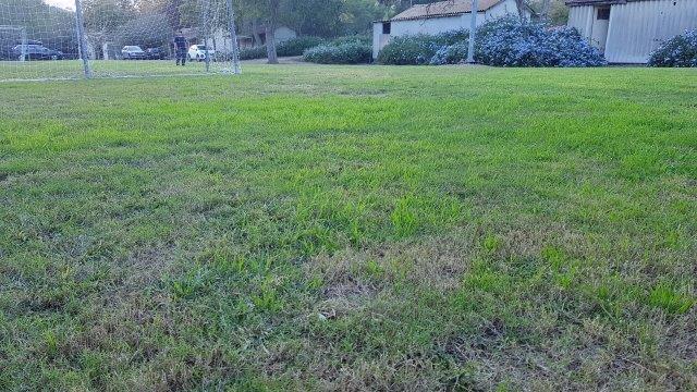 עירוב זנים של דשא במגרש כדורגל - יתרונות של כל זן בעונה אחרת