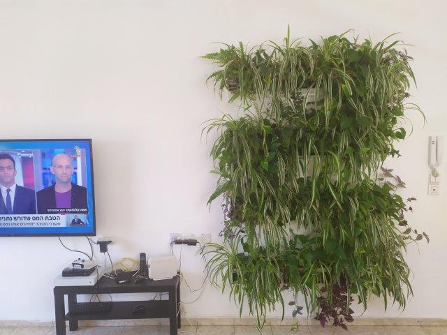 קיר ירוק בתוך דירה