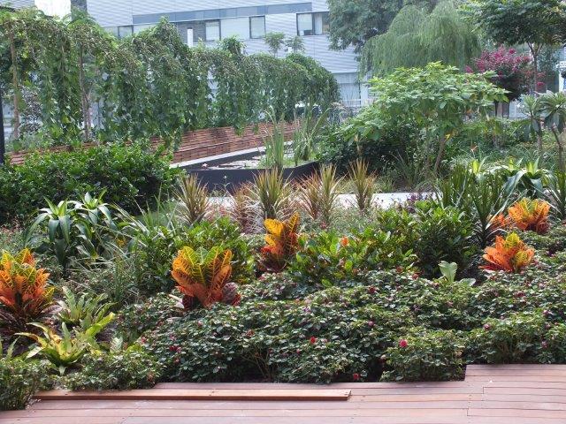 צמחים נמוכים עם נוכחות משמעותית