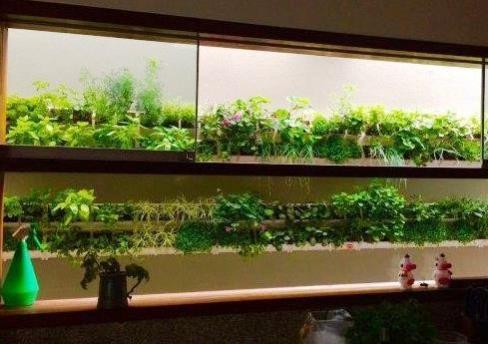 קיר ירוק פרקטי מול חלון המטבח. תכנון וצילום: וינאה גרין- קירות ירוקים