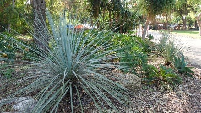 בשנים האחרונות משולבות בגן ערוגות עם צמחים עמידים וחיפוי