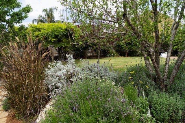 צמחיה בסגנון פראי המשתלב במרחב