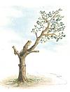 השארת ענף בשיטת ההרכבה על הזרועות