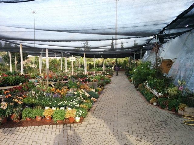 צמחים במשתלה