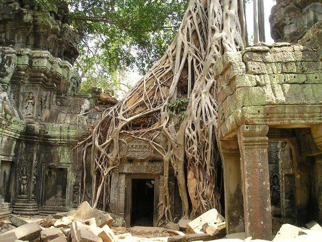 הכוח של שורשי העצים, קמבודיה