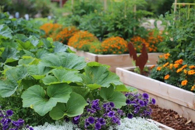 המלצות תשילת ירקות לקראת הקיץ