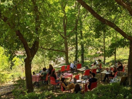 מרחב פתוח בגן הבוטני