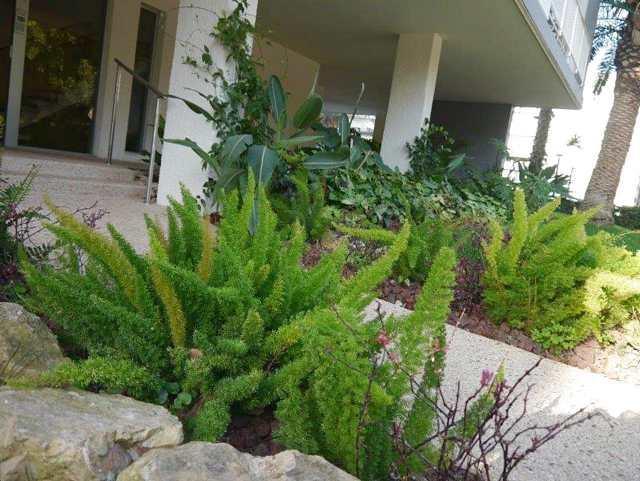 גינה בבית משותף בתל אביב