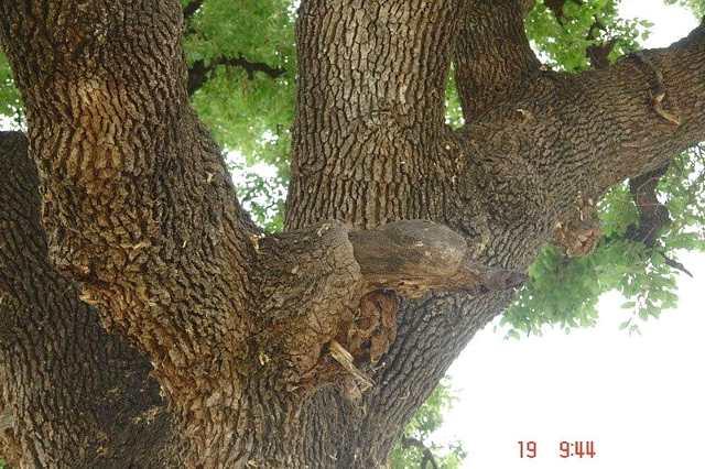 ענף שזקוק לסניטציה