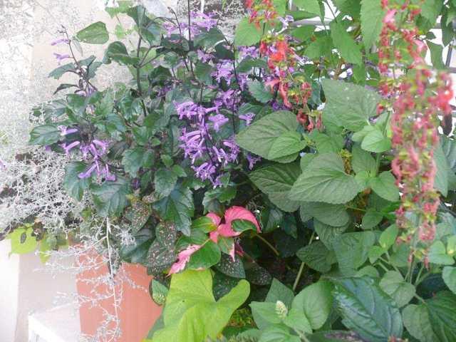 אחידות בצבעי עלווה והפריחה