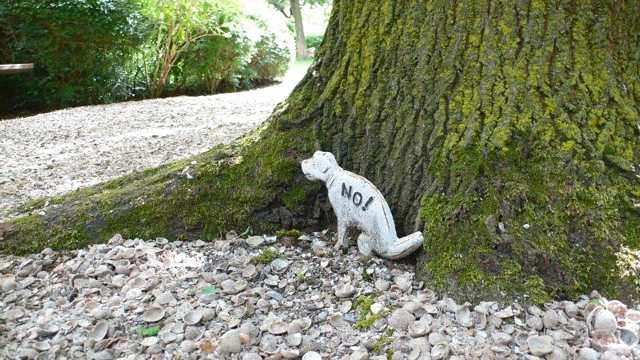 עצים עתיקים בגן